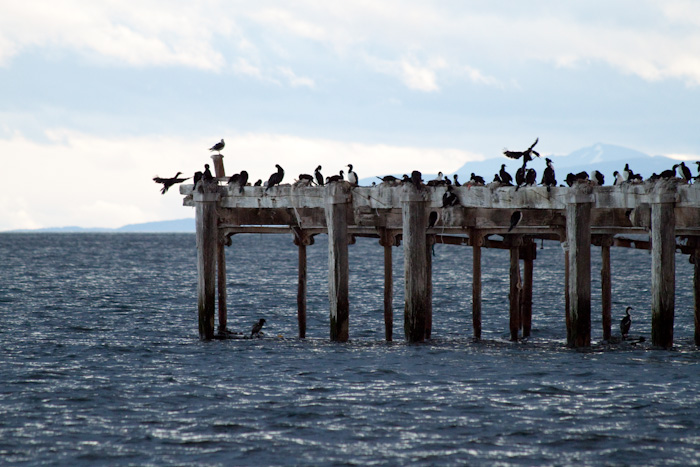 Birds on one of the old piers.