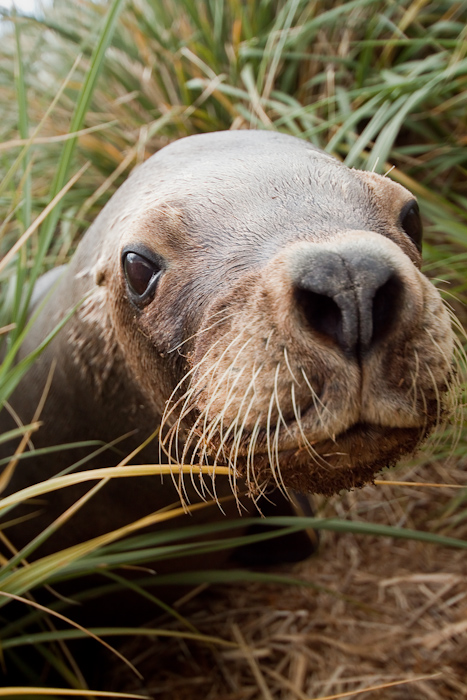The same Sea Lion in December 2009.