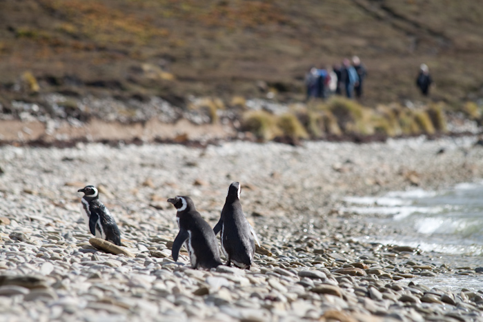 Penguins watching other people doing a similar walk to me.