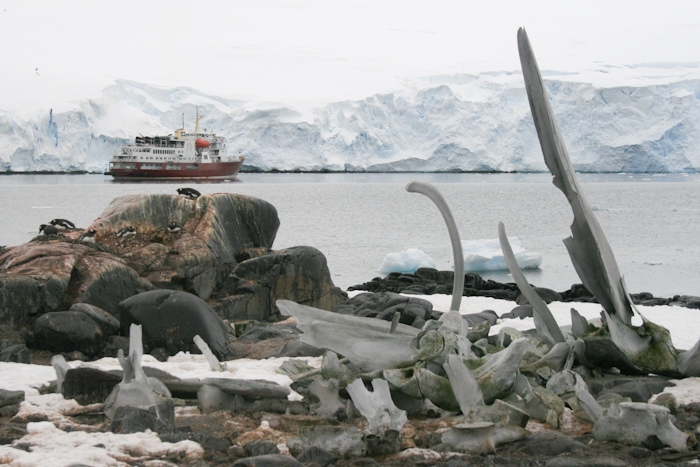 More whale bones and a research ship (2007).