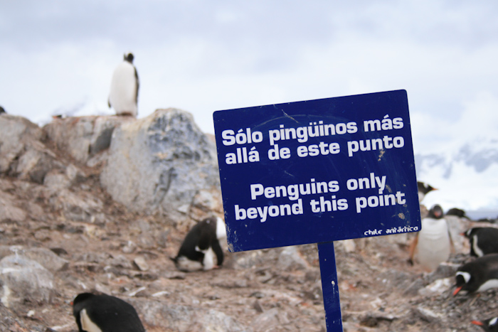 No humans beyond this point. In Antarctica, penguins have the right of way (2007).