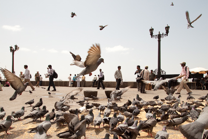 Next bad turn: the taxi driver wanted me to have my photo taken. Look at this photo below. You might think this is a photo of pigeons. It is, in fact, a picture of men carrying digital cameras and portable printers slung over their shoulders. Look closely. I can count seven.