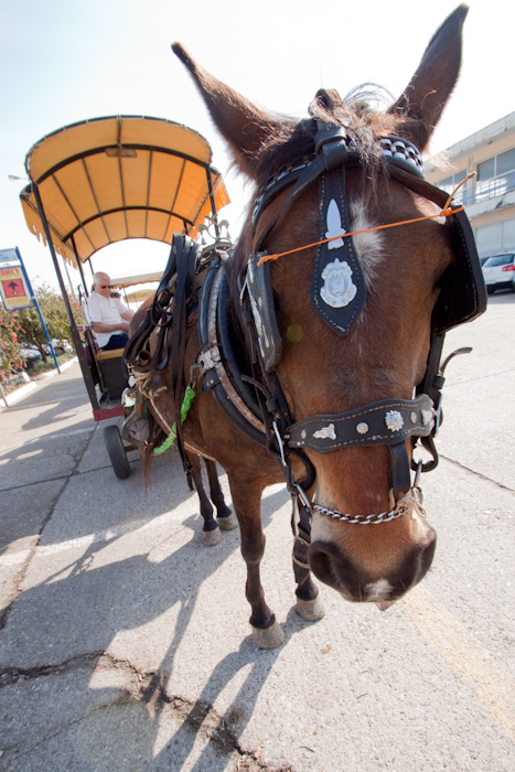 I didn't take a horse and carriage ride.