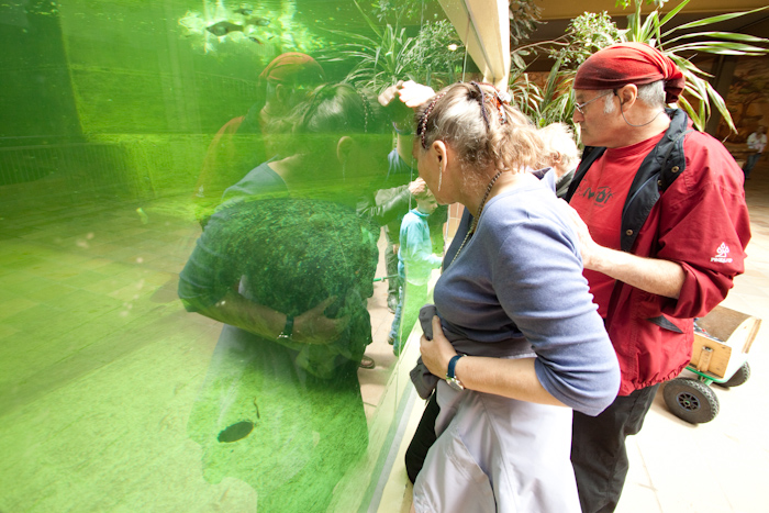 My parents looking into the manatee tank.