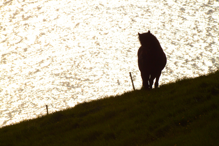 A silhouette of a horse.