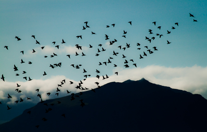 Birds flying in front of the mountains.