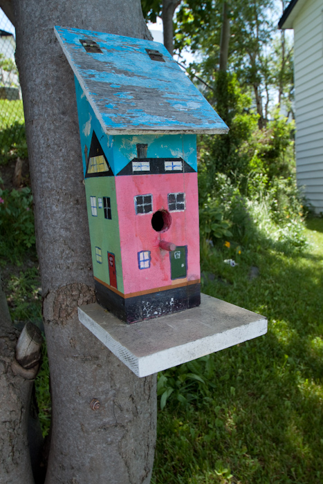 There are lots of painted wooden buildings in St. John's. Unfortunately none of them piqued my photographers eye. But this bird box did.