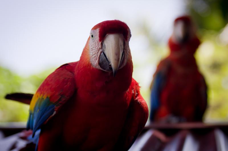 More parrots.