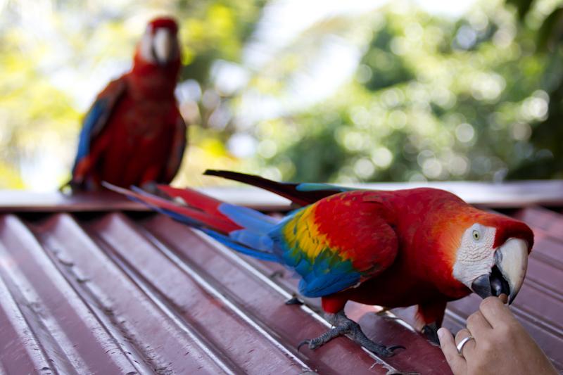 Feeding parrots.