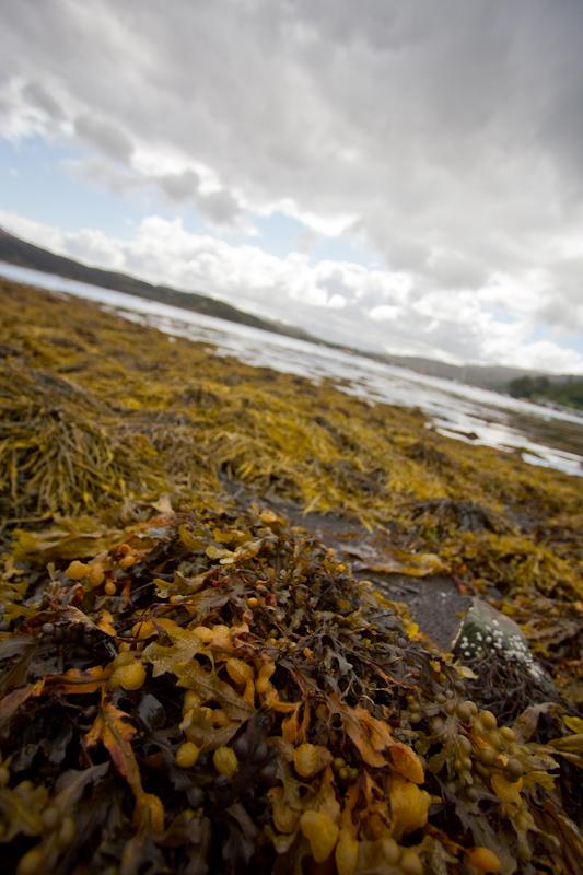The Isle of Skye.