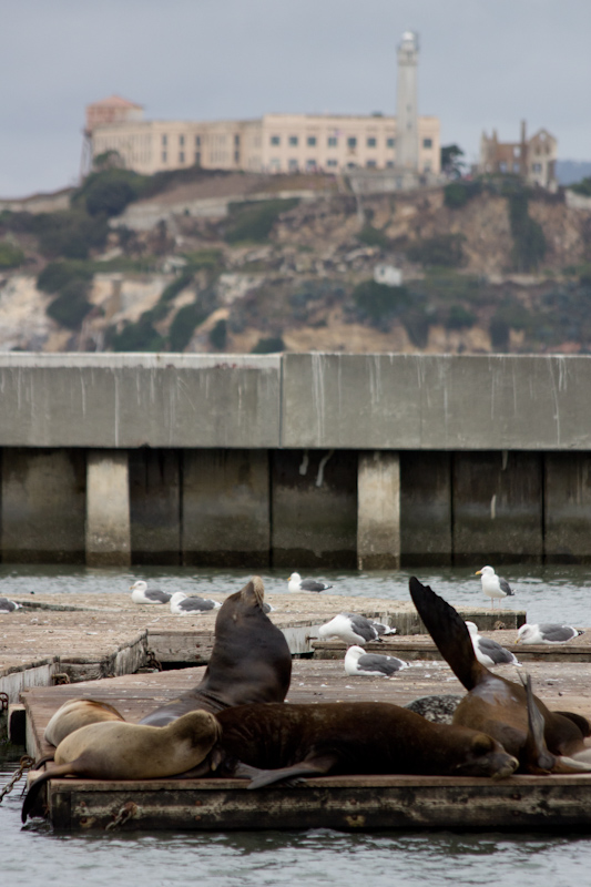 Sea lions and Alcatraz.