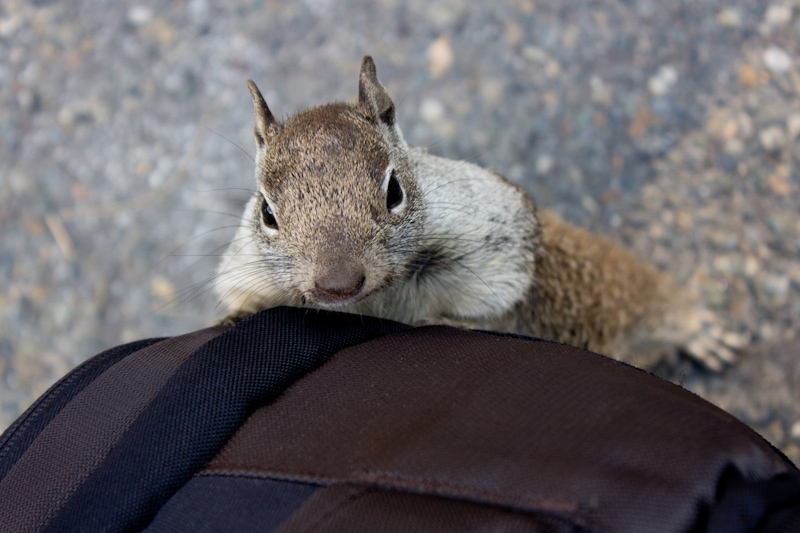 Squirrels everywhere, including on my camera bag!