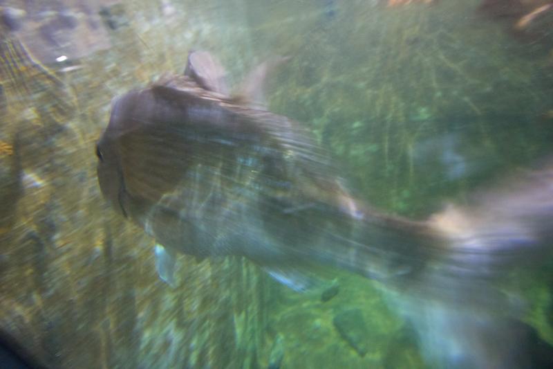 New Zealand: Picton aquarium