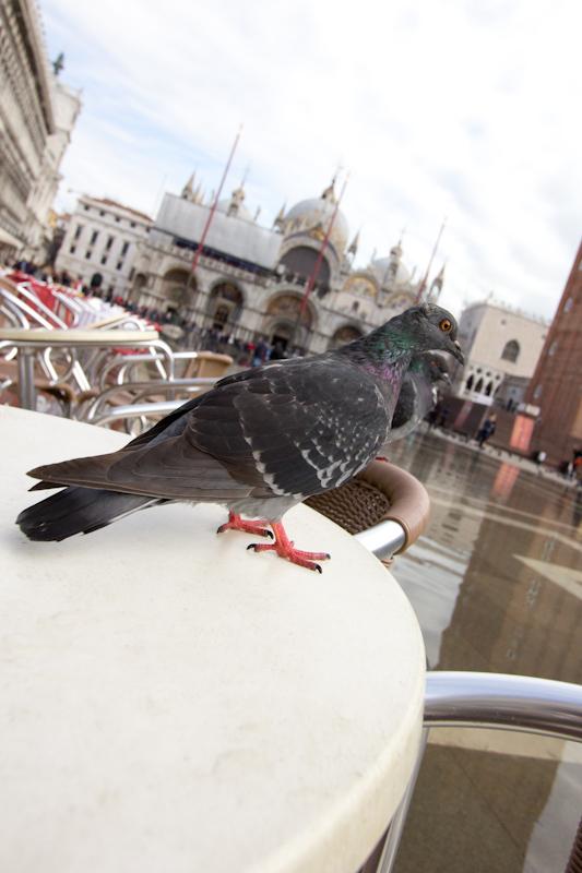 Venice: St. Mark's Square.