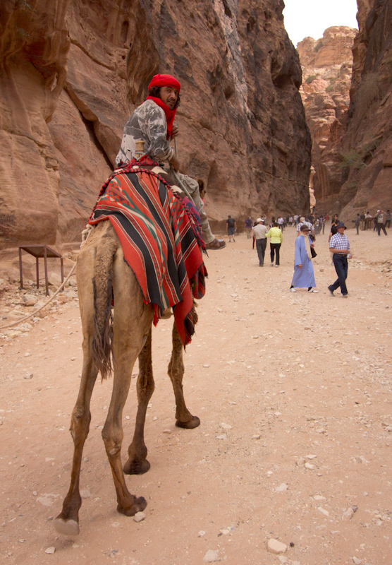 Petra, Jordan: A camel on its way to the Treasury.