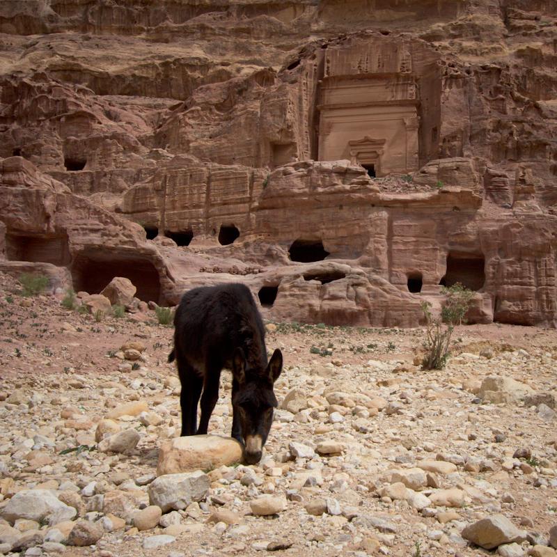 Petra, Jordan: Donkey!