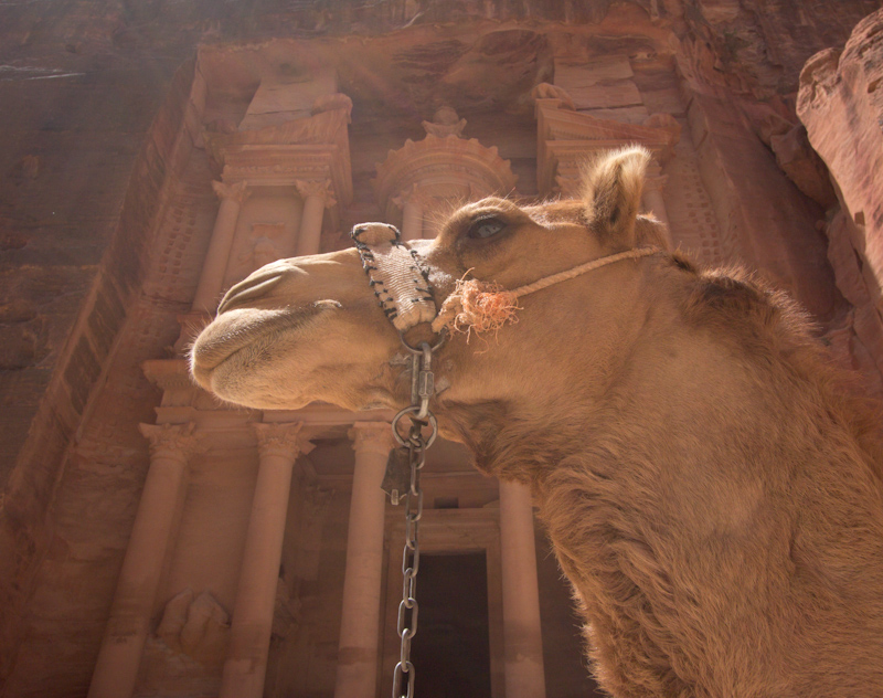 Petra, Jordan: The Treasury and a camel.