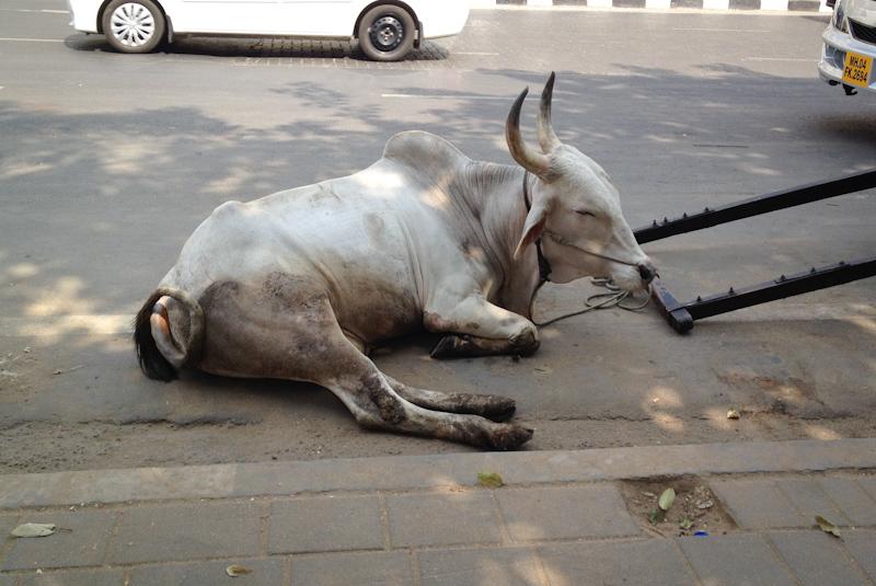 Asia Trip January 2014: Mumbai, India.