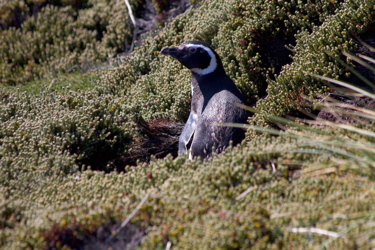 January 2016 Antarctica and Falklands: Port Stanley, Falklands