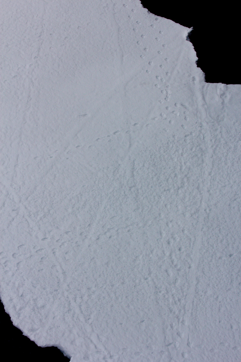 January 2016 Antarctica and Falklands: Penguin footprints