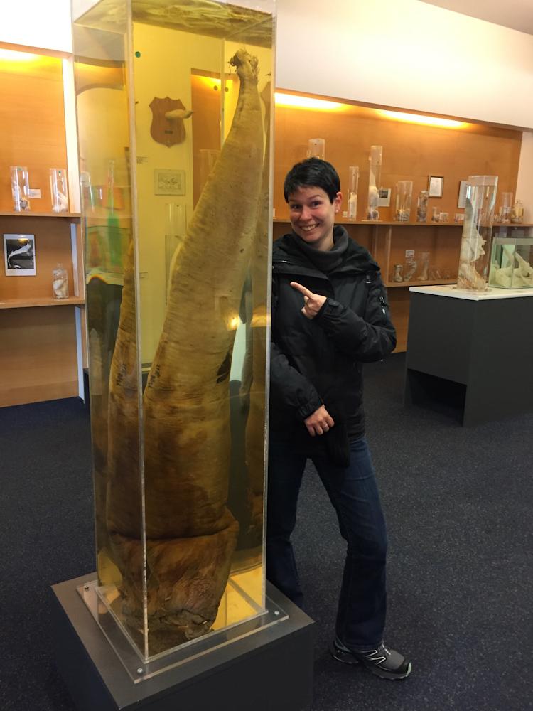 Iceland Adventure with Juliane and Luke: Icelandic Phallological Museum of Penises